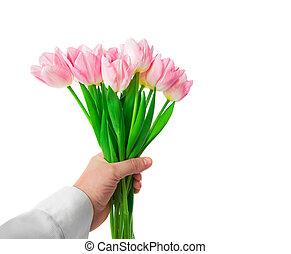 Beautiful Pink tulips flowers in man hand isolated on white background.