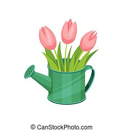 Beautiful pink tulips in green metal watering can. Fresh bouquet of spring flowers. Floral composition. Flat vector