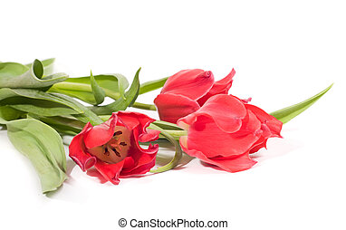 Beautiful pink tulips isolated on a white background