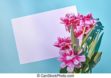 Beautiful pink tulips with white paper on a blue background with a place under the text