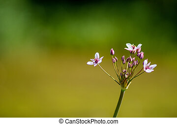 Beautiful pink wildflower on a blurred background