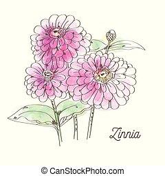 Beautiful pink zinnia on white background