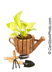 beautiful plant in a flowerpot and garden tools