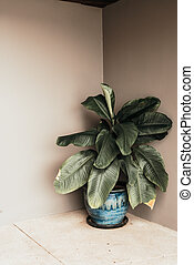 beautiful plant in pot with empty wall