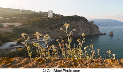 Beautiful plants growing on a cliff in the sunset light.