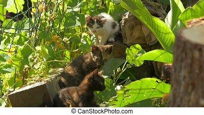Beautiful playing kittens