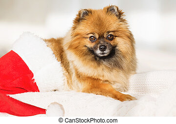 Christmas dog. happy new year card 2018 with the year dog symbol