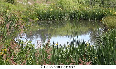 Beautiful Pond with Flowers - Little body of water...