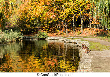 Beautiful pond with trees reflection in the water in the city park on a sunny fall day.