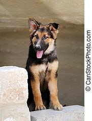 Beautiful portrait of a dog