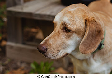 Beautiful portrait of a dog with sad expression in the park