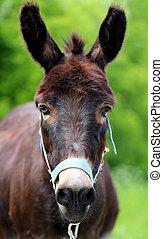 Beautiful portrait of a donkey