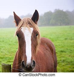 Beautiful portrait of horse in foggy field