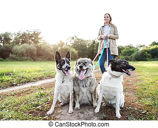 Beautiful pregnant woman with dogs in green sunny nature -...