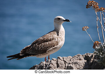 Beautiful proud bird stands on a stone near a bush with flowers against the blue sea