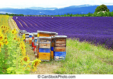 sunflower, lavander and beehive - Provence, France