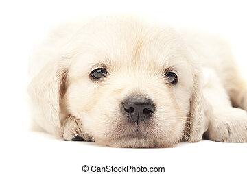 Beautiful puppy isolated over white