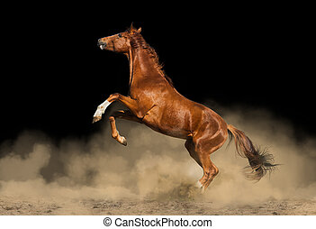 beautiful purebred horse over a black background in dust