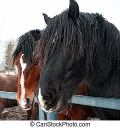 Beautiful purebred horses