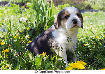 Beautiful purebred puppy sitting in the grass.