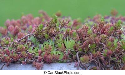 Static camera view of garden moss - Beautiful purple and...
