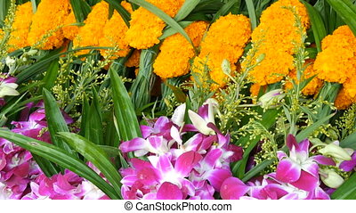 Beautiful purple and yellow Thai flowers. Exotic flowers of...