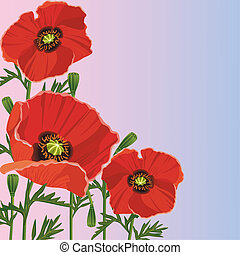 Beautiful purple background with flowers red poppies....