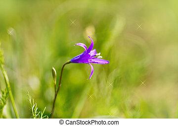 beautiful purple bell flowers in nature