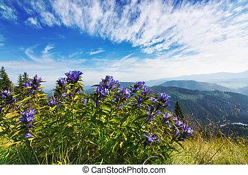 Beautiful purple bouquet of flowers in a landscape of Carpathian mountains. Synevir, Ukraine.