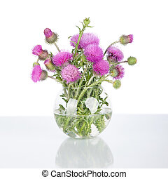 beautiful purple burdock wild flowers in vase isolated on white