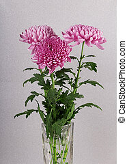 Beautiful purple chrysanthemums in a vase on a sparkling silver background