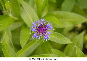beautiful purple flower close-up