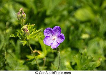 Beautiful purple flower in the meadow