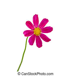 Beautiful purple flower isolated on a white background