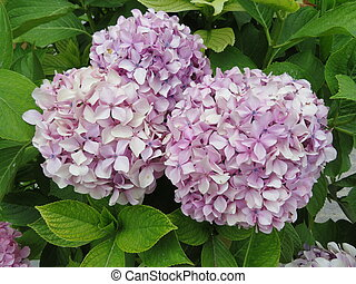 Beautiful purple flower of intense color and great beauty