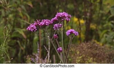 Beautiful purple flower on a field