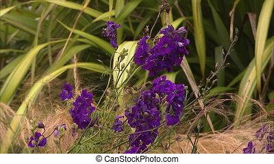 Beautiful purple flowers - A steady medium shot of purple...