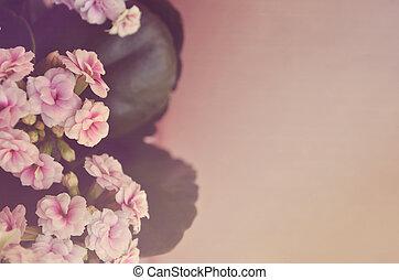 Beautiful purple flowers on brown background