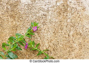 beautiful purple flowers on very old wall
