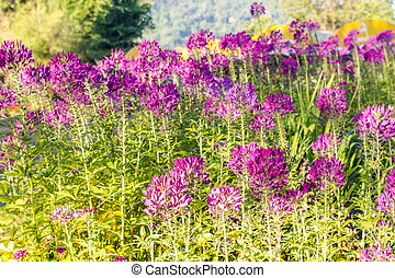 Beautiful purple flowers outdoors
