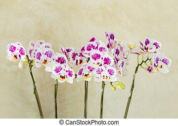 Beautiful purple orchid arranged in the garden.