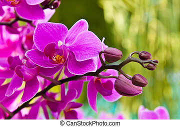 Beautiful purple orchid close up
