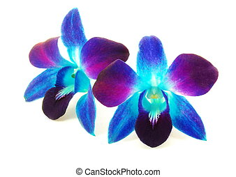 Beautiful Purple Orchid Flowers On Blue