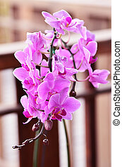 Beautiful purple orchid (Orchidaceae)