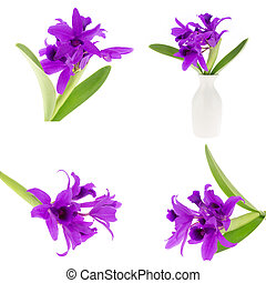 Beautiful purple orchid set  isolated on white background