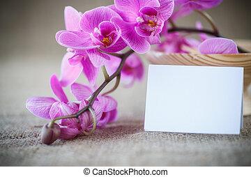 Beautiful purple phalaenopsis flowers on the table