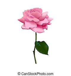 Beautiful purple pink rose isolated on white background. Vector illustration. isolated. Flower, stem, leaf.