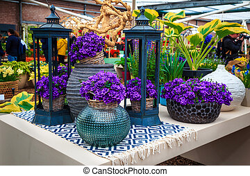Beautiful purple spring flowers in the ornamental ceramic flowerpot