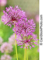 Beautiful purple spring flowers outdoors