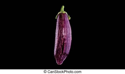 Striped colorful eggplant rotates on dark isolated background